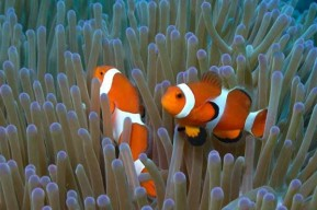 henoko coral fish